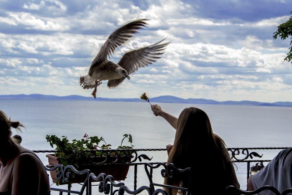 seagull-1016925_1920